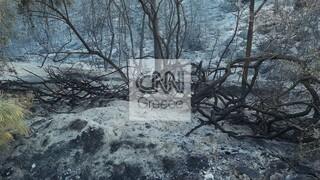 Φωτιά Σχίνος - Χαρδαλιάς: Έχουν καεί πάνω από 20.000 στρέμματα δάσους - Θα είναι μια δύσκολη βραδιά