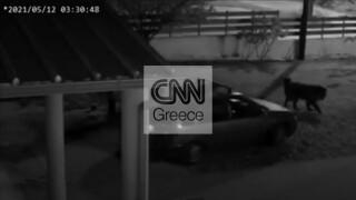 Θεσσαλονίκη: Ανάλγητοι ληστές σκοτώνουν σκυλί για να μην τους προδώσει
