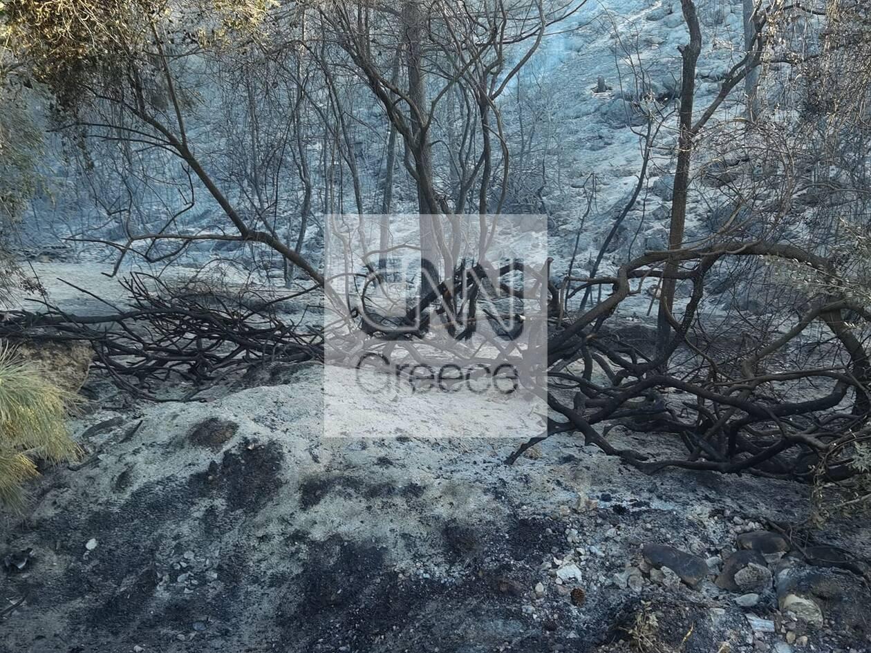 https://cdn.cnngreece.gr/media/news/2021/05/20/266719/photos/snapshot/fotia-sxino.jpg