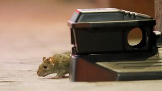 Αυστραλία: Πανούκλα από εκατομμύρια ποντίκια που έχουν κατακλύσει μεγάλες πόλεις