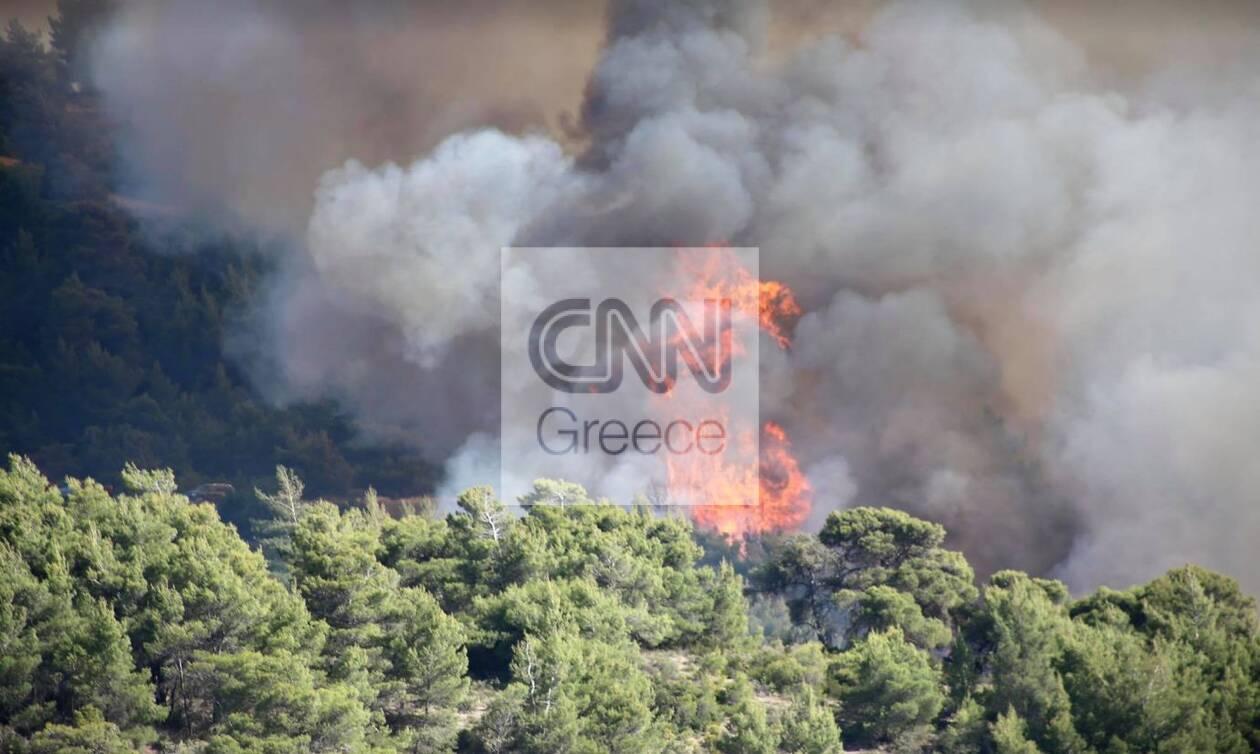 https://cdn.cnngreece.gr/media/news/2021/05/22/266966/photos/snapshot/fotia01.jpg