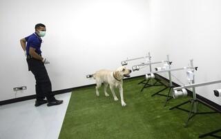 Κορωνοϊός - Βρετανία: Εκπαιδευμένοι σκύλοι μπορούν να εντοπίσουν ανθρώπους που νοσούν