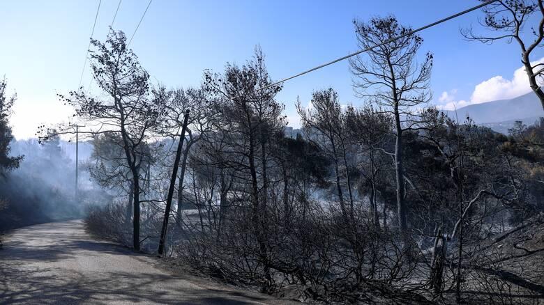 Στάχτη 52.000 στρέμματα δάσους: Η μεγαλύτερη πυρκαγιά της τελευταίας δεκαετίας στα Γεράνεια