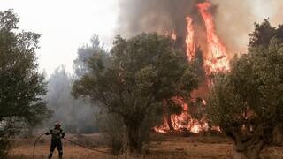 Συναγερμός στην Πυροσβεστική: Φωτιά στην Κέα - Μεταβαίνουν δυνάμεις από το Λαύριο