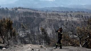 Αμυράς: Αναδασωτέα όλη η καμένη περιοχή στον Σχίνο - Fake news η τοποθέτηση ανεμογεννητριών