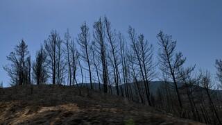 Περιφέρεια Αττικής: Να κηρυχθούν άμεσα αναδασωτέα τα καμμένα στα Γεράνεια Όρη