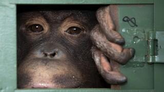Ταϊλάνδη: Πώς η χώρα προστατεύει το περιβάλλον και την υγεία καταπολεμώντας την εμπορία αγρίων ζώων