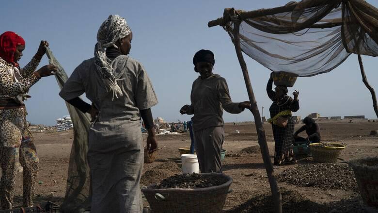 Η παραγωγή ιχθυελαίου και ιχθυάλευρου για την ΕΕ στερούν από τη Δ. Αφρική μέρος της τροφής τους