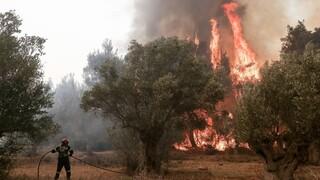 Συναγερμός στην πυροσβεστική: Πυρκαγιά στον οικισμό Βροχεία Αίγινας