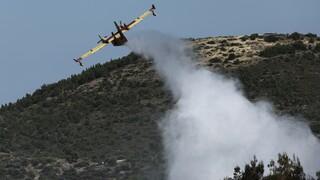 Φωτιά σε δασική περιοχή στα Μέγαρα - Κοντά στο πεδίο βολής