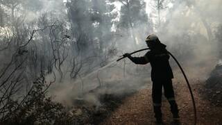 Οριοθετήθηκε η φωτιά στα Μέγαρα - Παραμένουν οι δυνάμεις της Πυροσβεστικής