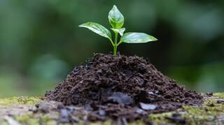 Παγκόσμια Ημέρα Περιβάλλοντος: Ξανα-φανταζόμαστε, ξανα-δημιουργούμε, αποκαθιστούμε