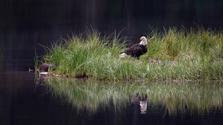 «Καμπανάκι» για την απώλεια της βιοποικιλότητας