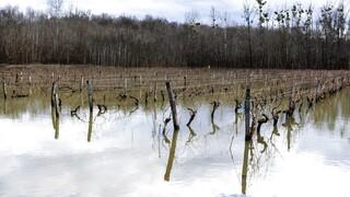Στην κλιματική αλλαγή οφείλεται ο παγετός που προκάλεσε ζημιές €2 δισ. στην αμπελουργία της Γαλλίας