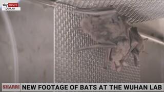 Sky News: Βίντεο με ζωντανές νυχτερίδες στο εργαστήριο της Γουχάν