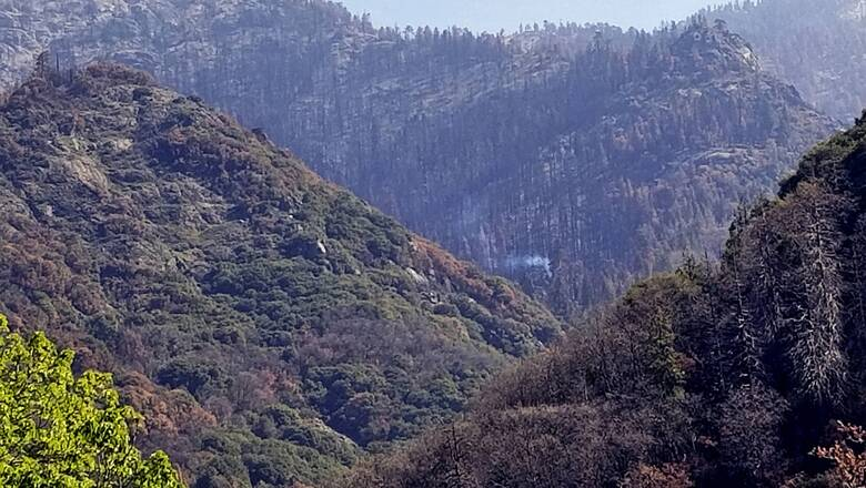 Το παράδειγμα της Καλιφόρνιας: Πώς οι επιστήμονες κάνουν τα δάση πιο ανθεκτικά στις πυρκαγιές