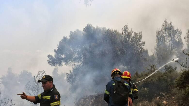 Συναγερμός στην Πυροσβεστική: Φωτιά σε δασική περιοχή στη Βόρεια Εύβοια