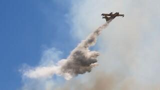 Ηλεία: Φωτιά κοντά στην Κυανή Ακτή