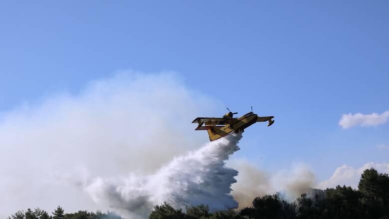 Ηλεία: Υπό μερικό έλεγχο η φωτιά στην Κυανή Ακτή
