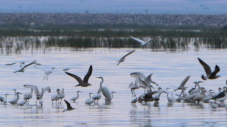 Λίμνη Κάρλα: Ένας από τους πιο σημαντικούς υδροβιότοπους της Ελλάδας