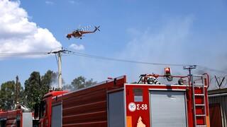 Φωτιά στο Ζέλι Φθιώτιδας - Επί τόπου πυροσβεστικές δυνάμεις