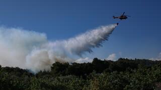 Μάχη με τις φλόγες στους Ασίτες Ηρακλείου - Ενισχύθηκαν οι δυνάμεις