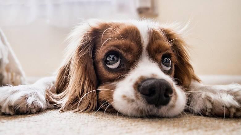 Μελέτη: Συνηθισμένο οι ασθενείς με κορωνοϊό να κολλάνε τις γάτες και τους σκύλους τους