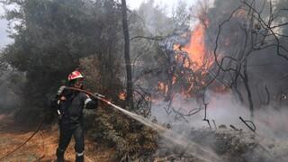 Συναγερμός στην Πυροσβεστική: Δύο νέες πυρκαγιές σε Θάσο και Καστοριά