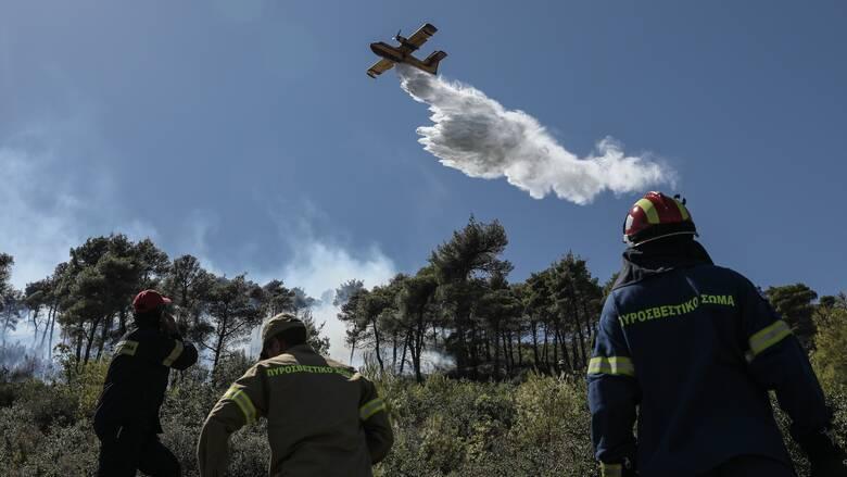 Χαλκιδική: Φωτιά μαίνεται από τα ξημερώματα - Ισχυρές δυνάμεις στην περιοχή