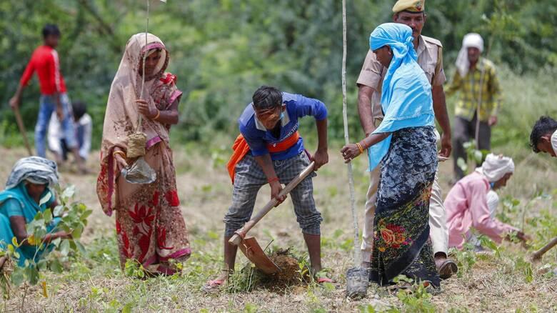 Ινδία: Φυτεύουν 250 εκατομμύρια δέντρα για να κρατήσουν τη χώρα πράσινη