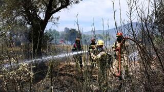 Υπό έλεγχο η φωτιά στο Μαρκόπουλο - Έσβησαν οι φλόγες σε Πάρνηθα και Πεντέλη