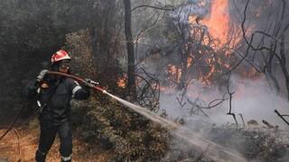 Φωτιά στη Χίο: Εντολή εκκένωσης χωριού - Μεγάλη κινητοποίηση της Πυροσβεστικής