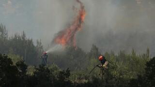 Πυρκαγιές: Σε ύφεση στα μέτωπα - Σύλληψη για τη φωτιά στα Στύρα - Πολύ υψηλός κίνδυνος και σήμερα