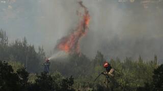 Πυρκαγιές: Ύφεση σε Νικήτη και Νέα Ζίχνη Σερρών - Φωτιά και στα Κύμινα Θεσσαλονίκης