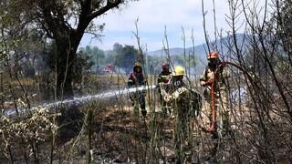Φωτιά σε δασική έκταση στη Χασιά Αττικής - Δεν απειλούνται άμεσα κατοικίες