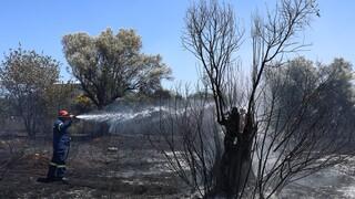 Υπό μερικό έλεγχο τέθηκε η φωτιά στη Χασιά Αττικής