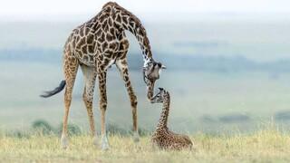 Φωτογράφοι άγριας ζωής συγκεντρώνουν χρήματα για τα πάρκα της Αφρικής