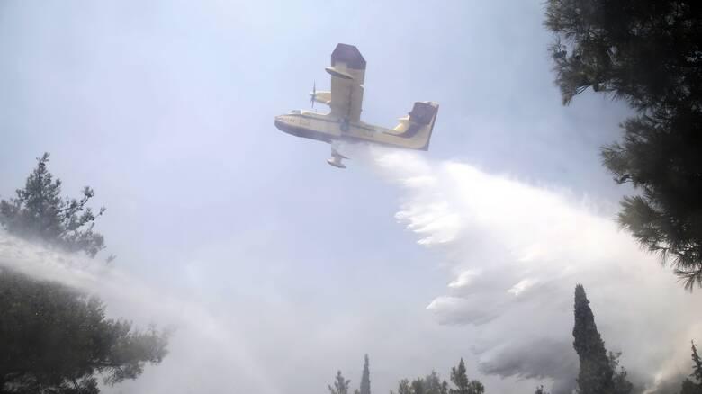 Φωτιά στον Βόλο στην περιοχή Περίβλεπτο - Κινητοποίηση της πυροσβεστικής