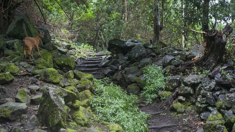 Χαβάη: Οι κάτοικοι σώζουν ένα εθνικό πάρκο... υιοθετώντας κατσίκες