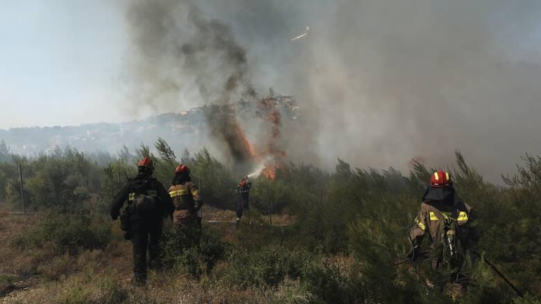 Φωτιά στο Λασίθι καίει δασική έκταση - Μεγάλη κινητοποίηση της Πυροσβεστικής