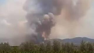 Μαίνεται η φωτιά στο Καλέντζι Κορινθίας: Ενισχύθηκαν οι πυροσβεστικές δυνάμεις