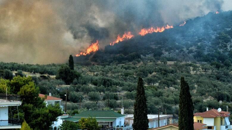 Μαίνονται οι φωτιές σε Νέα Αλμυρή και Επίδαυρο - Υπό έλεγχο το μέτωπο στην Εύβοια