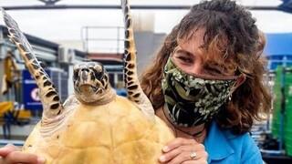Η Ελληνίδα φύλακας- άγγελος της θαλάσσιας χελώνας στη Νότια Αφρική