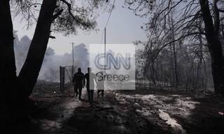 Φωτιά στη Σταμάτα: Εικόνες αγωνίας και καταστροφής - Σε αυλές σπιτιών οι φλόγες