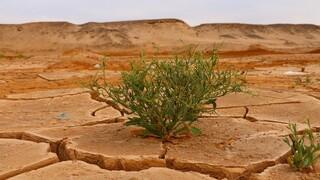 Κλιματική αλλαγή: «Καμπανάκι» από 13.000 επιστήμονες για άμεση λήψη μέτρων