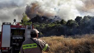 Πυρκαγιά σε εξέλιξη στη Δροσιά Αχαΐας