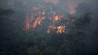 Τουρκία: Ένας νεκρός και δέκα εγκλωβισμένοι από τη μεγάλη δασική πυρκαγιά