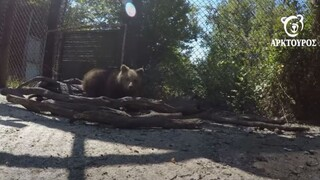 Θεσσαλονίκη: Στην αγκαλιά του Αρκτούρου έξι ορφανά άγρια ζώα