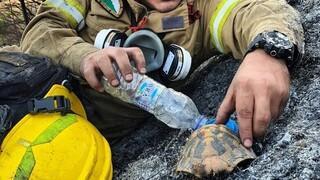 Η εικόνα που έγινε viral: Πυροσβέστης δίνει νερό σε χελώνα μετά τη φωτιά στην Αχαΐα