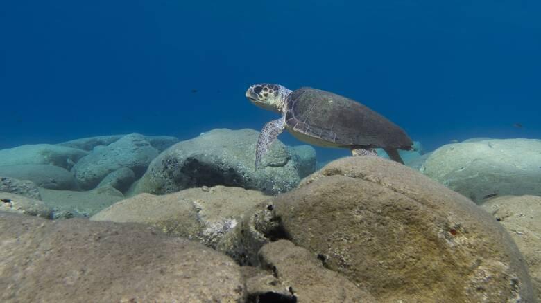 Θεσσαλονίκη: Σεμινάριο για την προστασία θαλάσσιων χελωνών, καρχαριών και βάτων